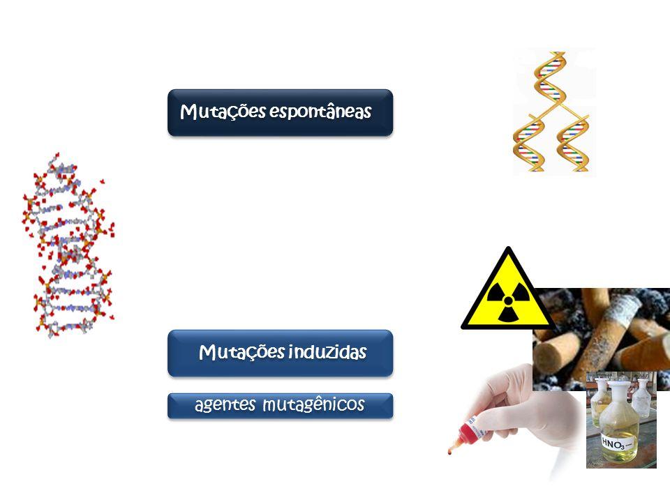 Mutações cromossômicas : mudanças na estrutura ou no número de cromossomos Mutações gênic as: mudanças em um ou poucos nucleotídeos