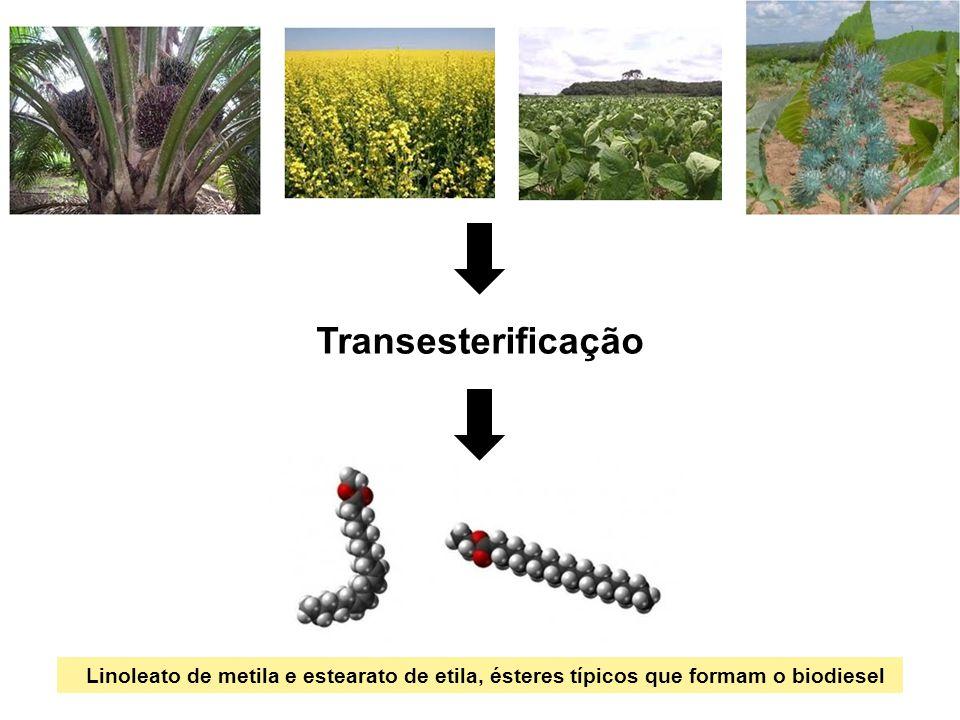 Transesterificação Linoleato de metila e estearato de etila, ésteres típicos que formam o biodiesel