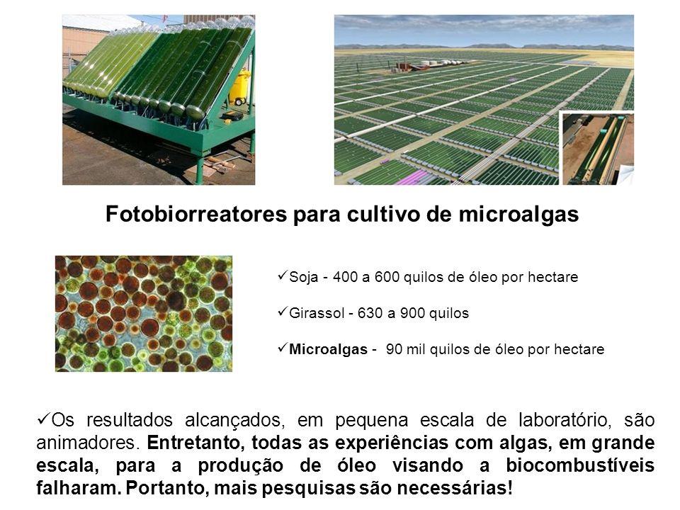 Fotobiorreatores para cultivo de microalgas Soja - 400 a 600 quilos de óleo por hectare Girassol - 630 a 900 quilos Microalgas - 90 mil quilos de óleo