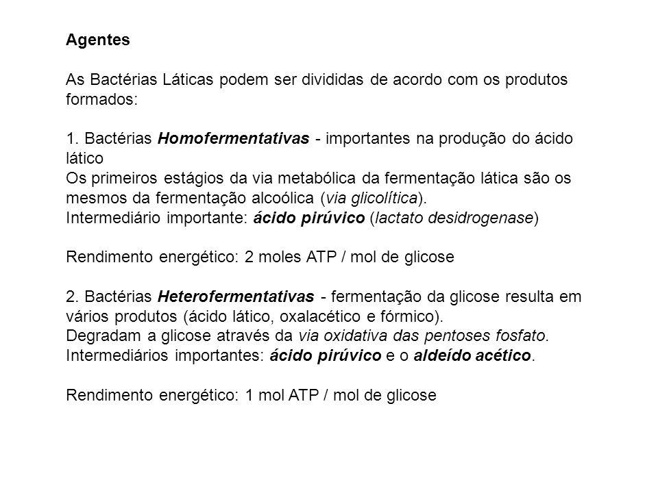 Agentes As Bactérias Láticas podem ser divididas de acordo com os produtos formados: 1. Bactérias Homofermentativas - importantes na produção do ácido