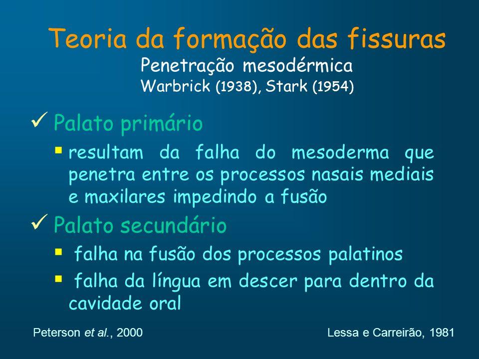 Teoria da formação das fissuras Penetração mesodérmica Warbrick (1938), Stark (1954) Palato primário resultam da falha do mesoderma que penetra entre