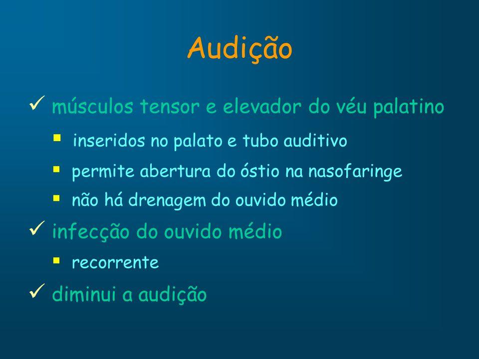 Audição músculos tensor e elevador do véu palatino inseridos no palato e tubo auditivo permite abertura do óstio na nasofaringe não há drenagem do ouv