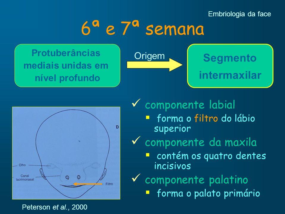 6ª e 7ª semana Embriologia da face Protuberâncias mediais unidas em nível profundo Segmento intermaxilar Origem componente labial forma o filtro do lá