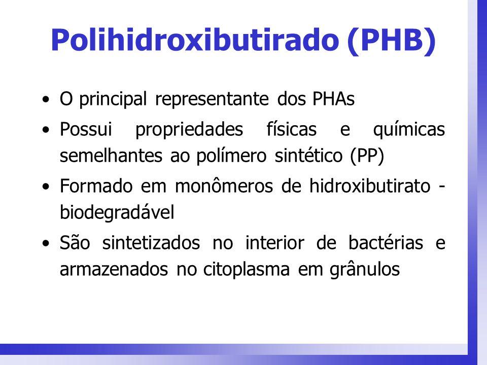 Polihidroxibutirado (PHB) O principal representante dos PHAs Possui propriedades físicas e químicas semelhantes ao polímero sintético (PP) Formado em