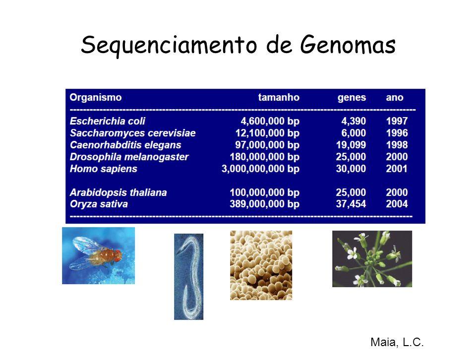Sequenciamento de Genomas Maia, L.C.
