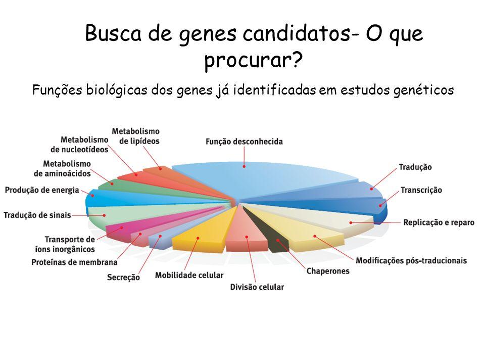 Funções biológicas dos genes já identificadas em estudos genéticos Busca de genes candidatos- O que procurar?