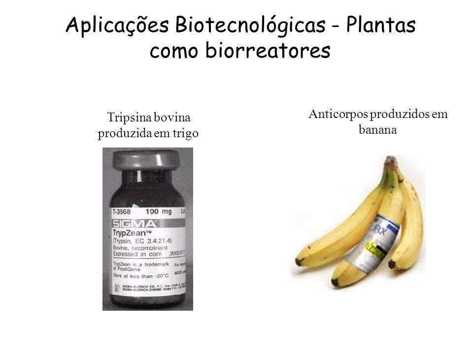 Tripsina bovina produzida em trigo Anticorpos produzidos em banana Aplicações Biotecnológicas - Plantas como biorreatores