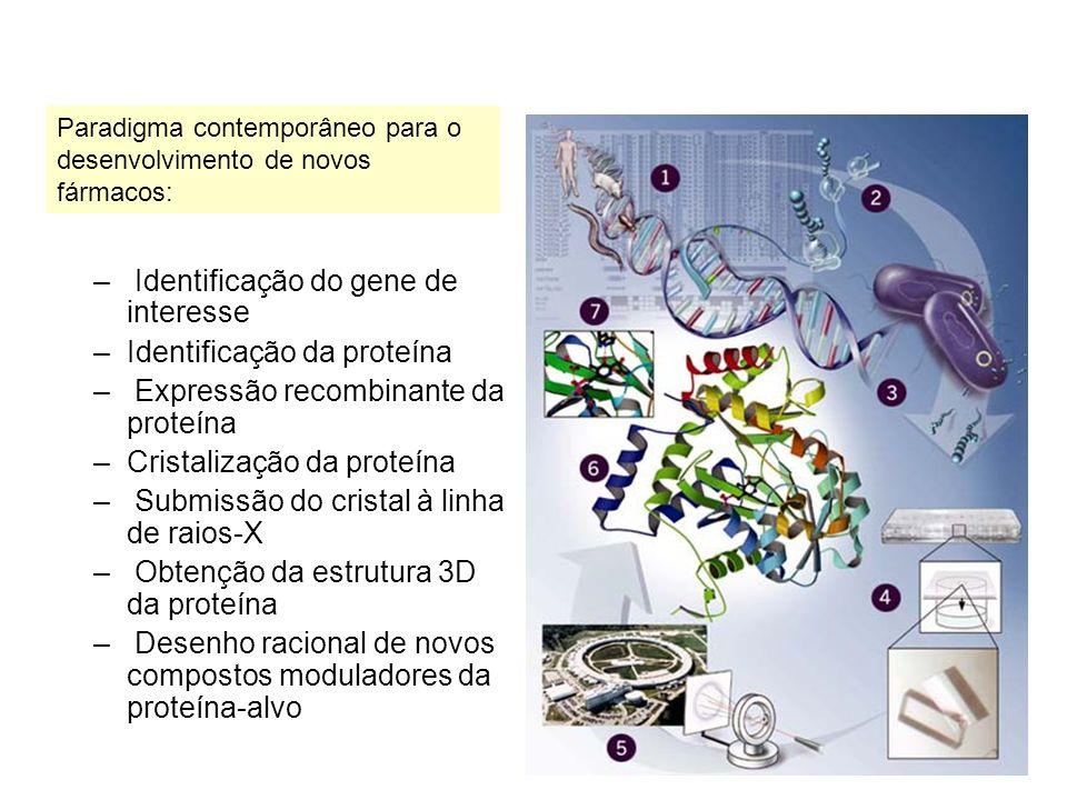 – Identificação do gene de interesse –Identificação da proteína – Expressão recombinante da proteína –Cristalização da proteína – Submissão do cristal