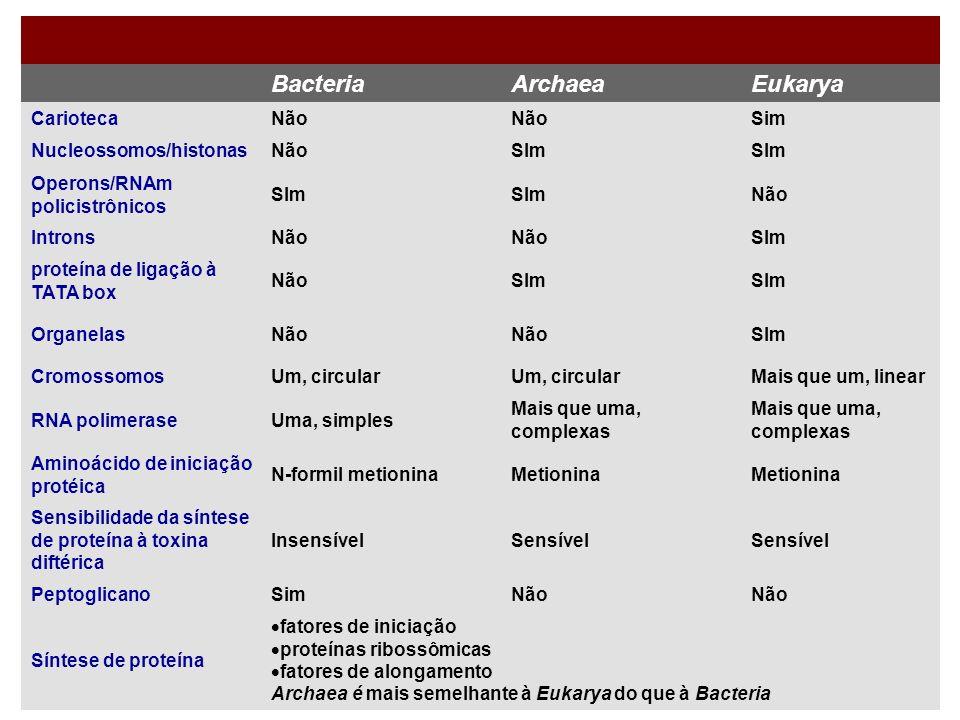 BacteriaArchaeaEukarya CariotecaNão Sim Nucleossomos/histonasNãoSIm Operons/RNAm policistrônicos SIm Não IntronsNão SIm proteína de ligação à TATA box