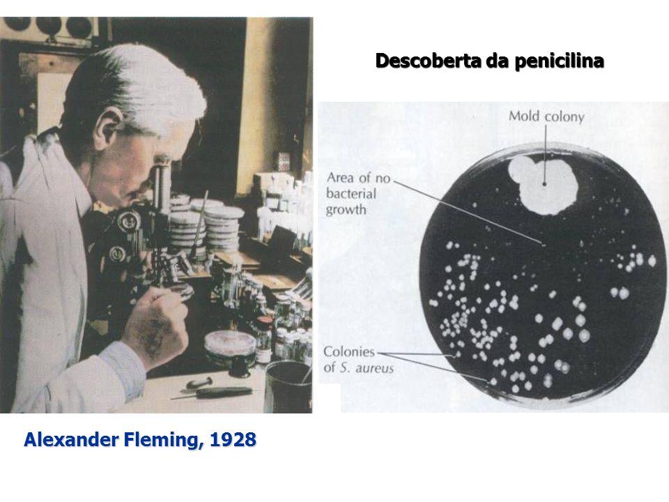 Alexander Fleming, 1928 Descoberta da penicilina
