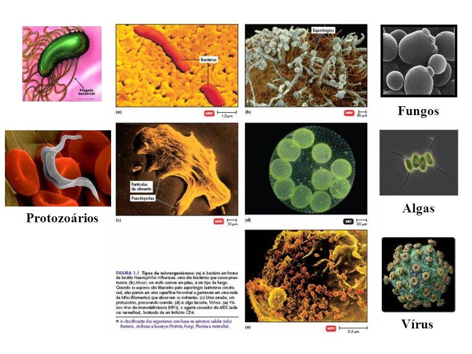 Vírus Fungos Protozoários Algas