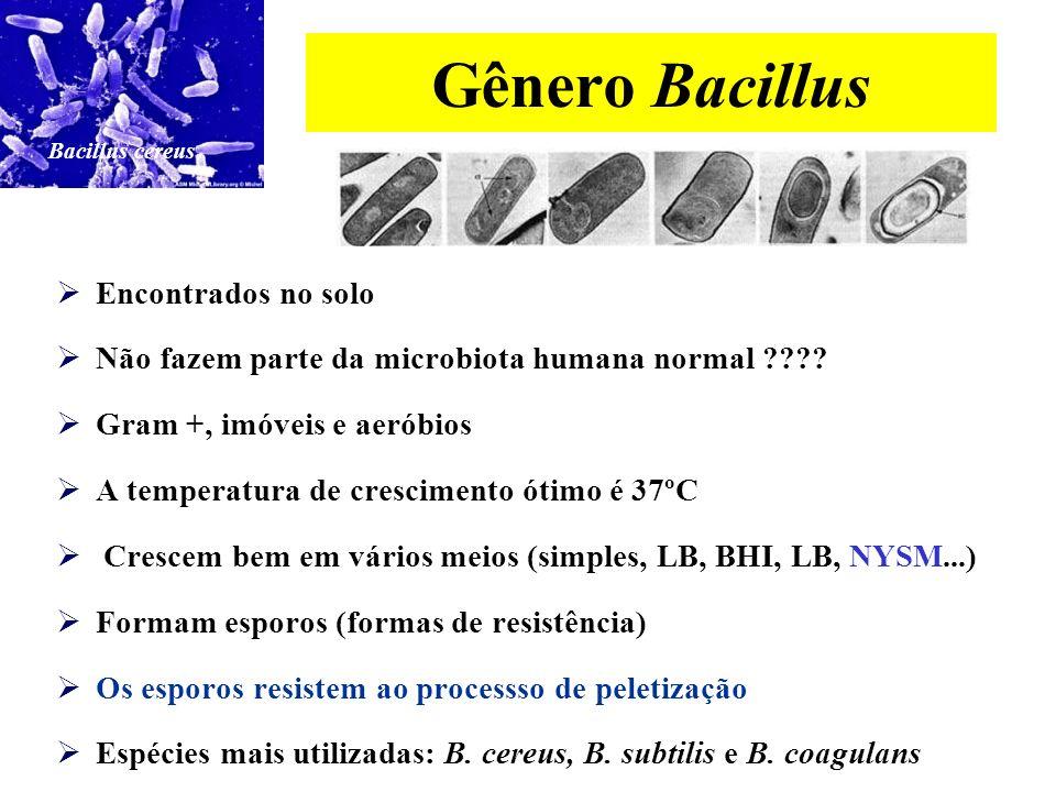 Gênero Bifidobacterium Fazem parte da microbiota humana normal (vagina e intestino grosso) Possuem uma boa resistência à acidez gástrica e aos sais biliares * Cerca de 30% alcançam o intestino delgado vivas, atingindo assim altas concentrações no cólon.