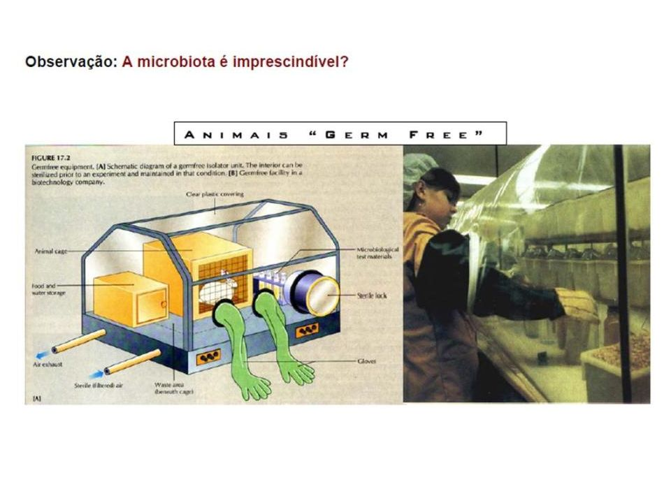 Downstream processing Centrifugação Liofilização Spray Dryer Refrigeração Materiais mais usados: goma arábica, amido, celuloses, maltodextrina, proteínas e lipídeos...