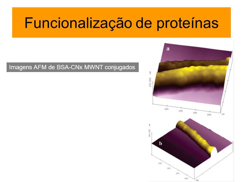 Funcionalização de proteínas Imagens AFM de BSA-CNx MWNT conjugados