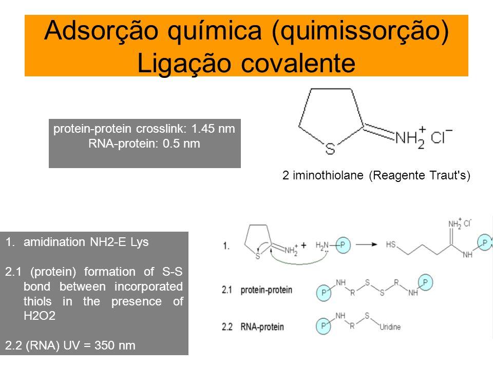 Adsorção química (quimissorção) Ligação covalente 2 iminothiolane (Reagente Traut's) protein-protein crosslink: 1.45 nm RNA-protein: 0.5 nm 1.amidinat