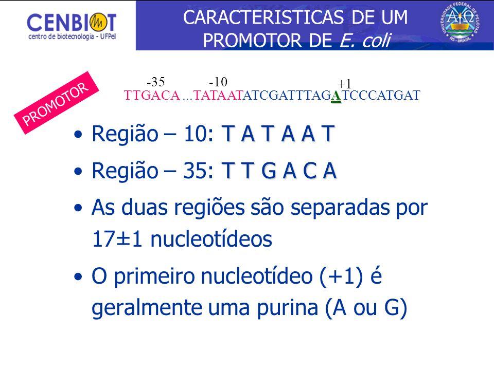 T A T A A TRegião – 10: T A T A A T T T G A C ARegião – 35: T T G A C A As duas regiões são separadas por 17±1 nucleotídeos O primeiro nucleotídeo (+1