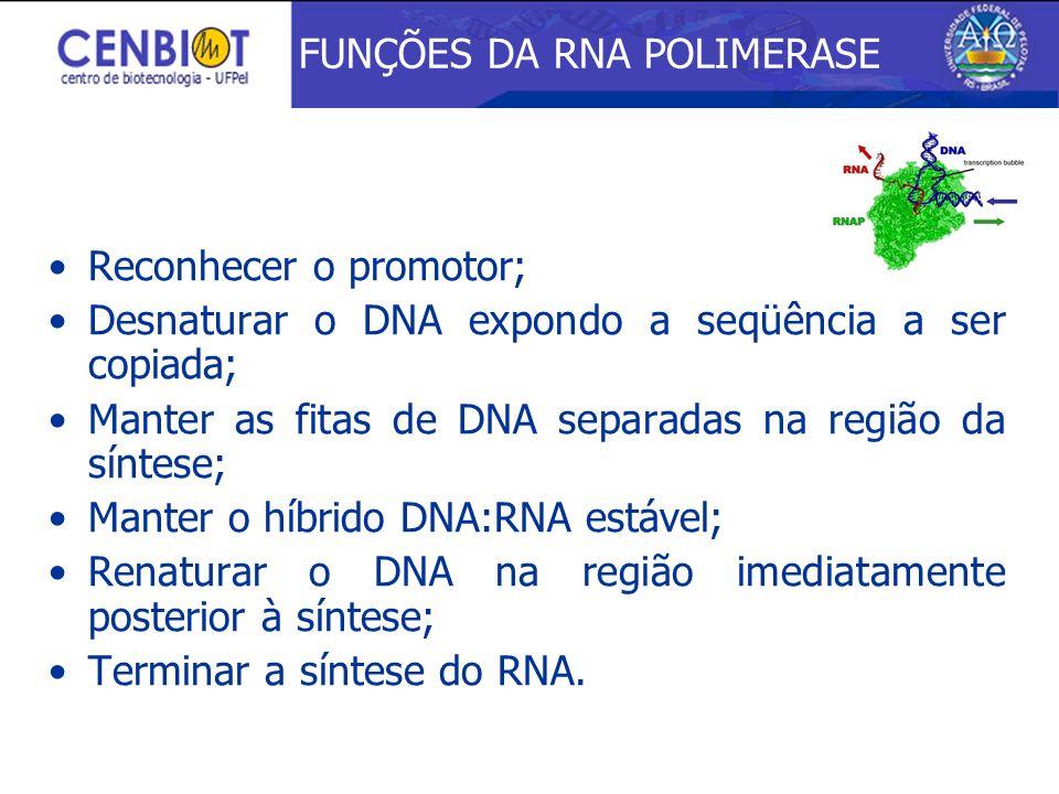 Reconhecer o promotor; Desnaturar o DNA expondo a seqüência a ser copiada; Manter as fitas de DNA separadas na região da síntese; Manter o híbrido DNA