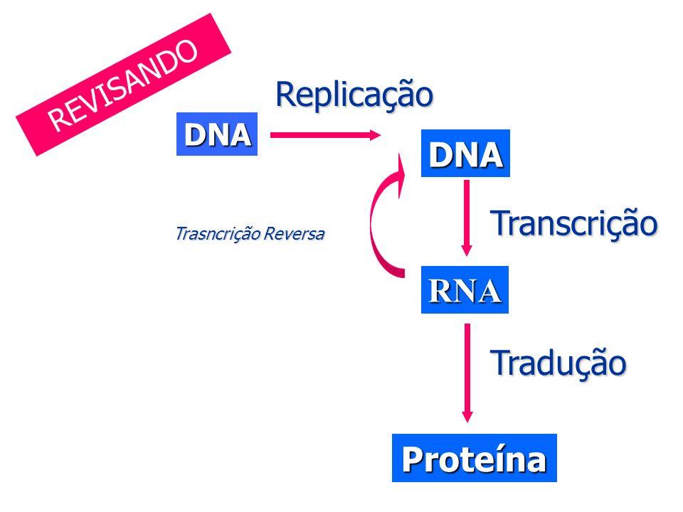 DNA DNA RNA ProteínaReplicaçãoTranscrição Tradução Trasncrição Reversa REVISANDO