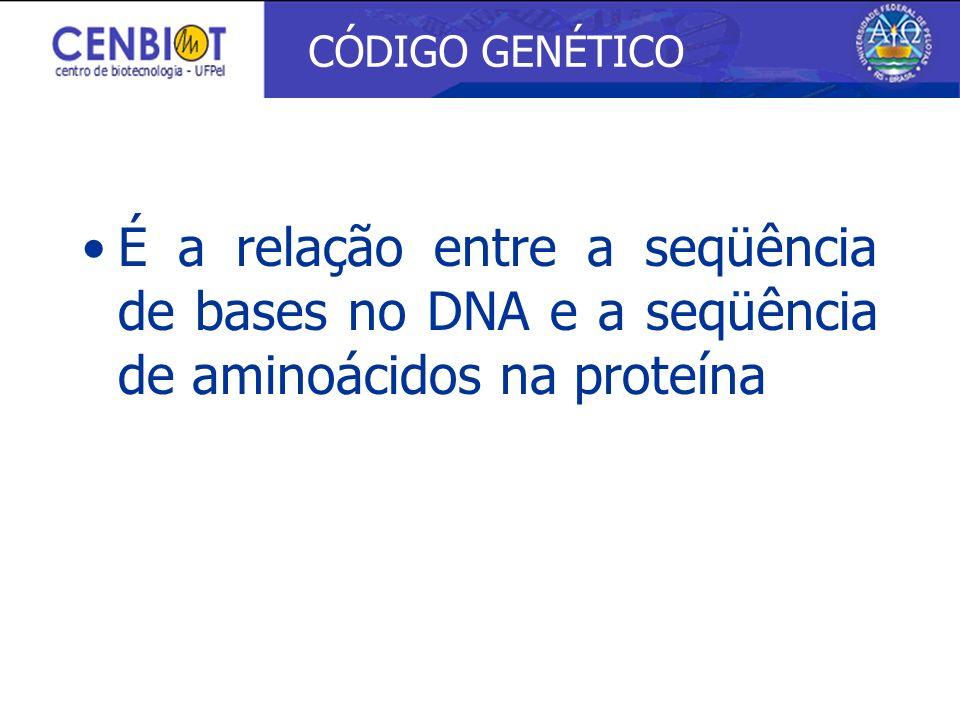 É a relação entre a seqüência de bases no DNA e a seqüência de aminoácidos na proteína CÓDIGO GENÉTICO