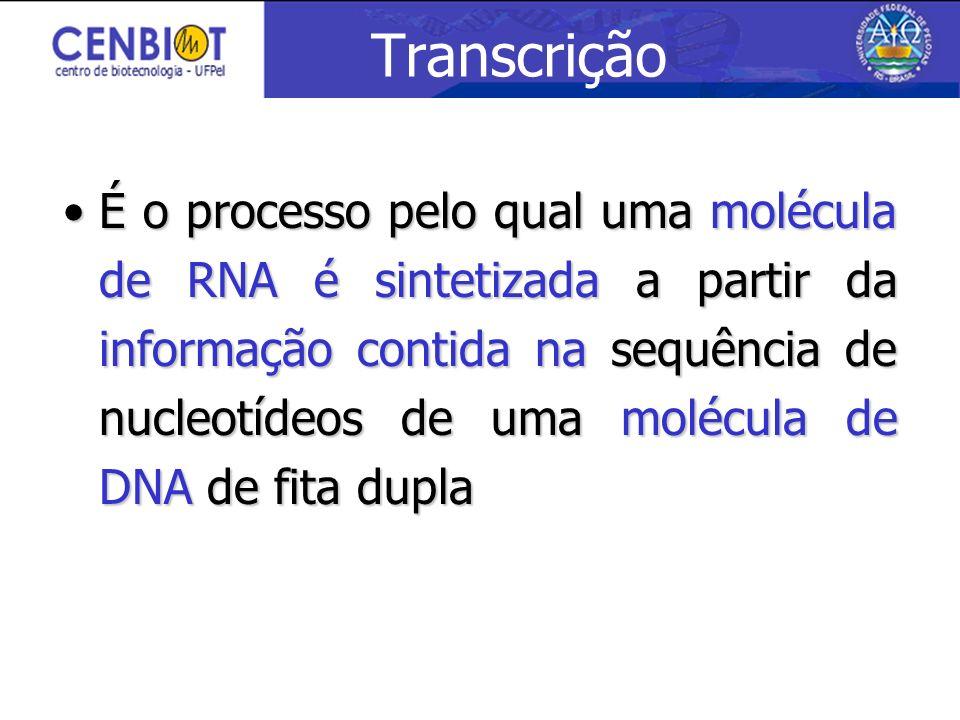 Transcrição É o processo pelo qual uma molécula de RNA é sintetizada a partir da informação contida na sequência de nucleotídeos de uma molécula de DN
