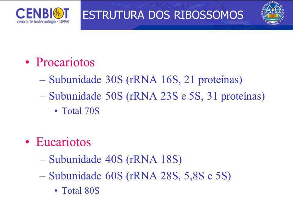 Procariotos –Subunidade 30S (rRNA 16S, 21 proteínas) –Subunidade 50S (rRNA 23S e 5S, 31 proteínas) Total 70S Eucariotos –Subunidade 40S (rRNA 18S) –Su