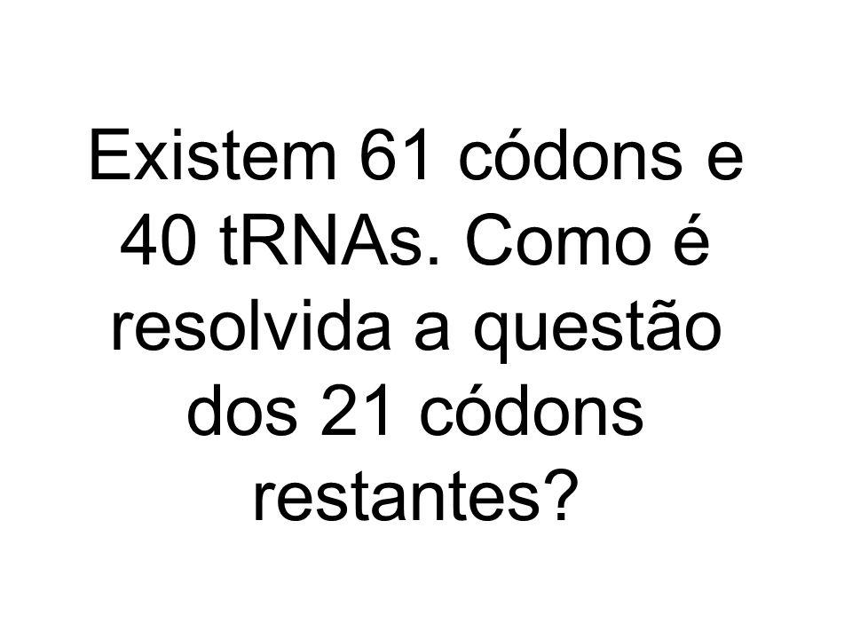 Existem 61 códons e 40 tRNAs. Como é resolvida a questão dos 21 códons restantes?