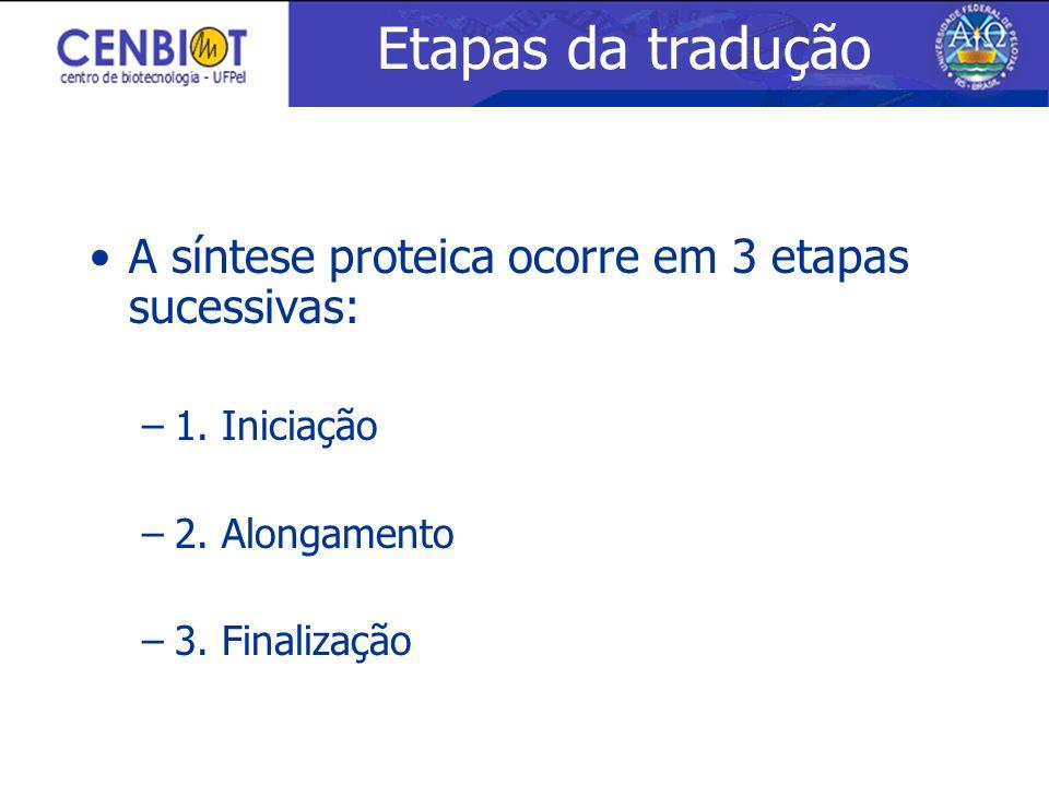 Etapas da tradução A síntese proteica ocorre em 3 etapas sucessivas: –1. Iniciação –2. Alongamento –3. Finalização