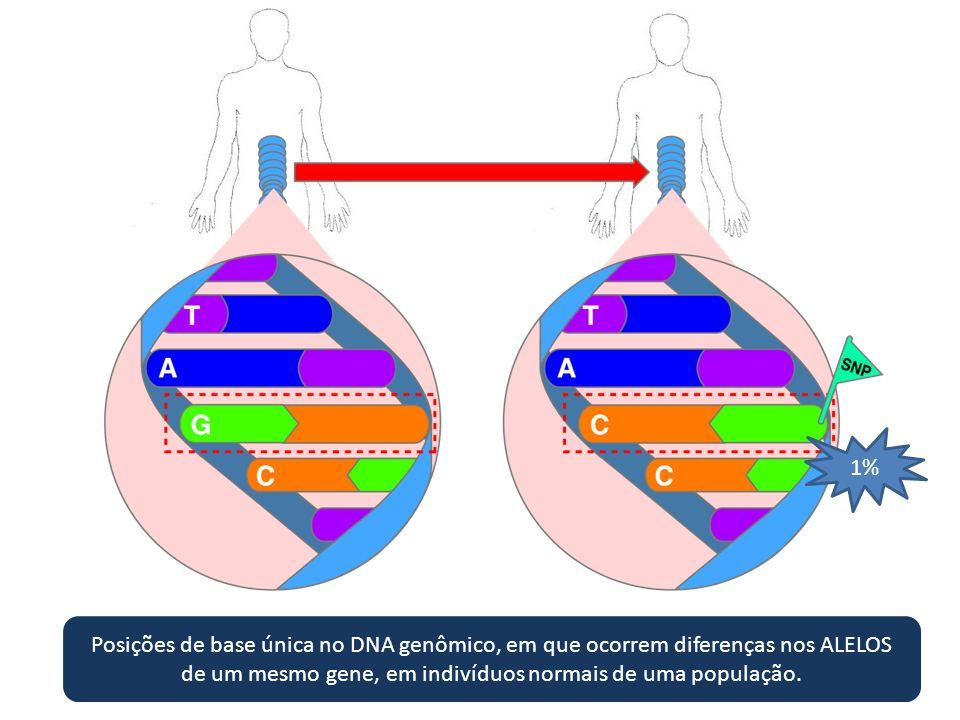 Posições de base única no DNA genômico, em que ocorrem diferenças nos ALELOS de um mesmo gene, em indivíduos normais de uma população. 1%