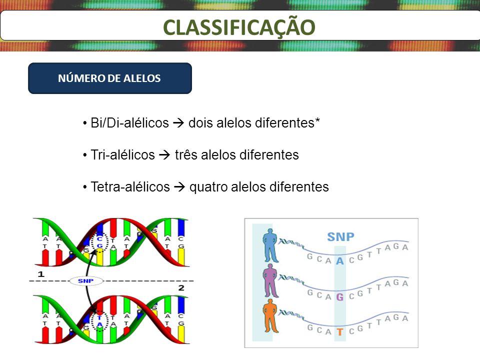CLASSIFICAÇÃO NÚMERO DE ALELOS Bi/Di-alélicos dois alelos diferentes* Tri-alélicos três alelos diferentes Tetra-alélicos quatro alelos diferentes