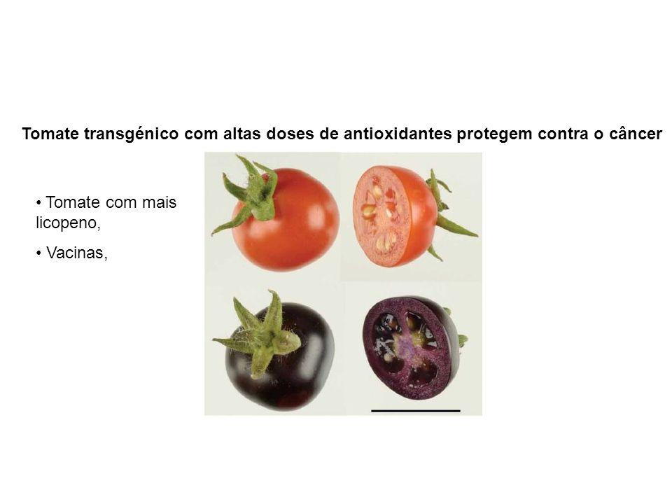 Tomate transgénico com altas doses de antioxidantes protegem contra o câncer Tomate com mais licopeno, Vacinas,