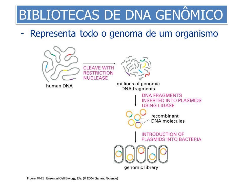 - Representa todo o genoma de um organismo