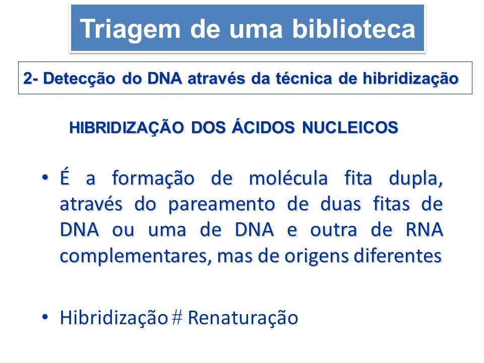 É a formação de molécula fita dupla, através do pareamento de duas fitas de DNA ou uma de DNA e outra de RNA complementares, mas de origens diferentes