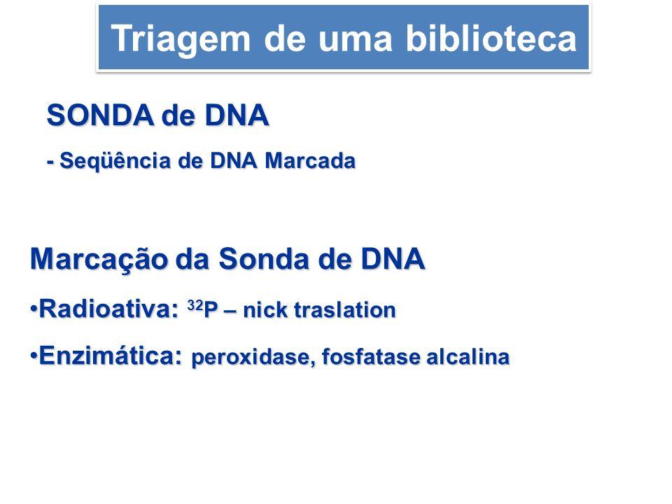 Marcação da Sonda de DNA Radioativa: 32 P – nick traslationRadioativa: 32 P – nick traslation Enzimática: peroxidase, fosfatase alcalinaEnzimática: pe