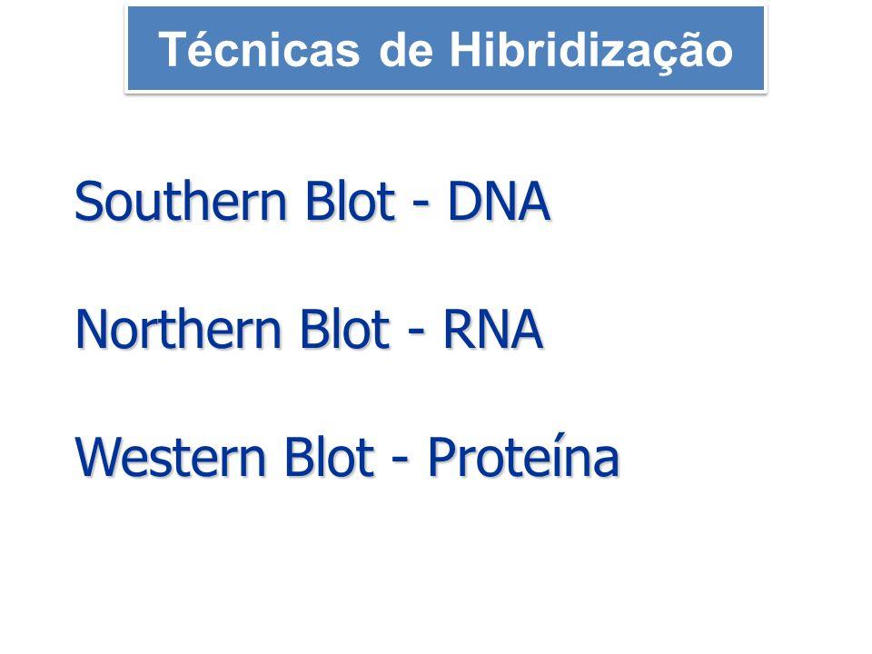 Southern Blot - DNA Northern Blot - RNA Western Blot - Proteína Técnicas de Hibridização