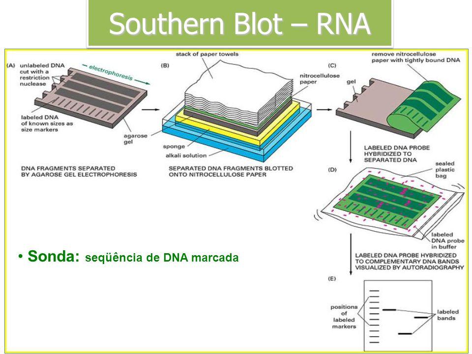 Sonda: seqüência de DNA marcada Transferência de DNA do gel para a membrana Southern Blot – RNA
