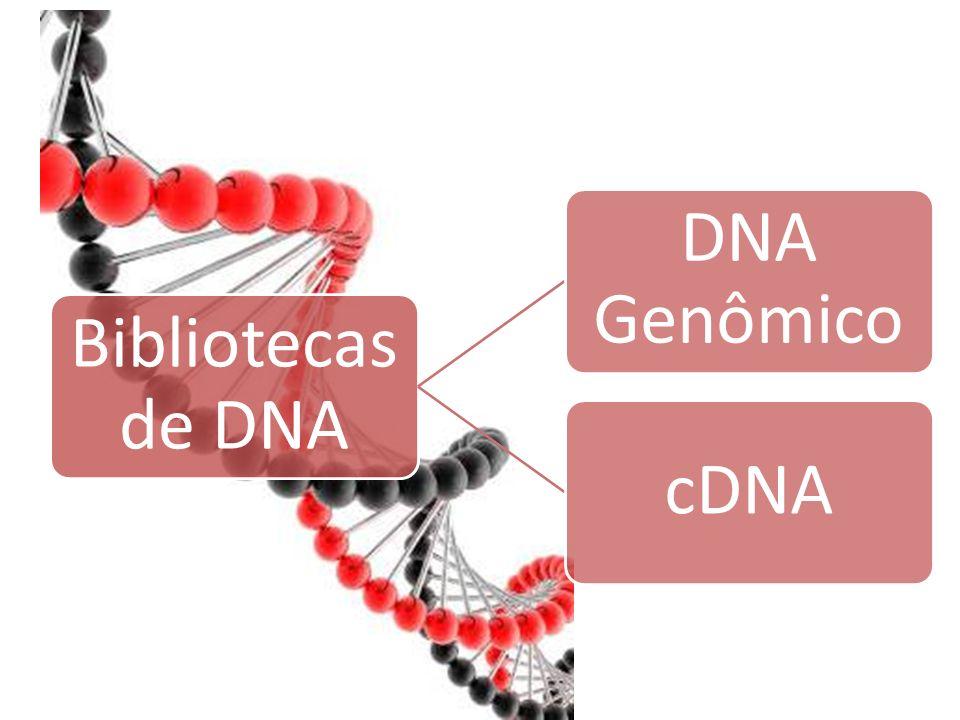Bibliotecas de DNA DNA Genômico cDNA