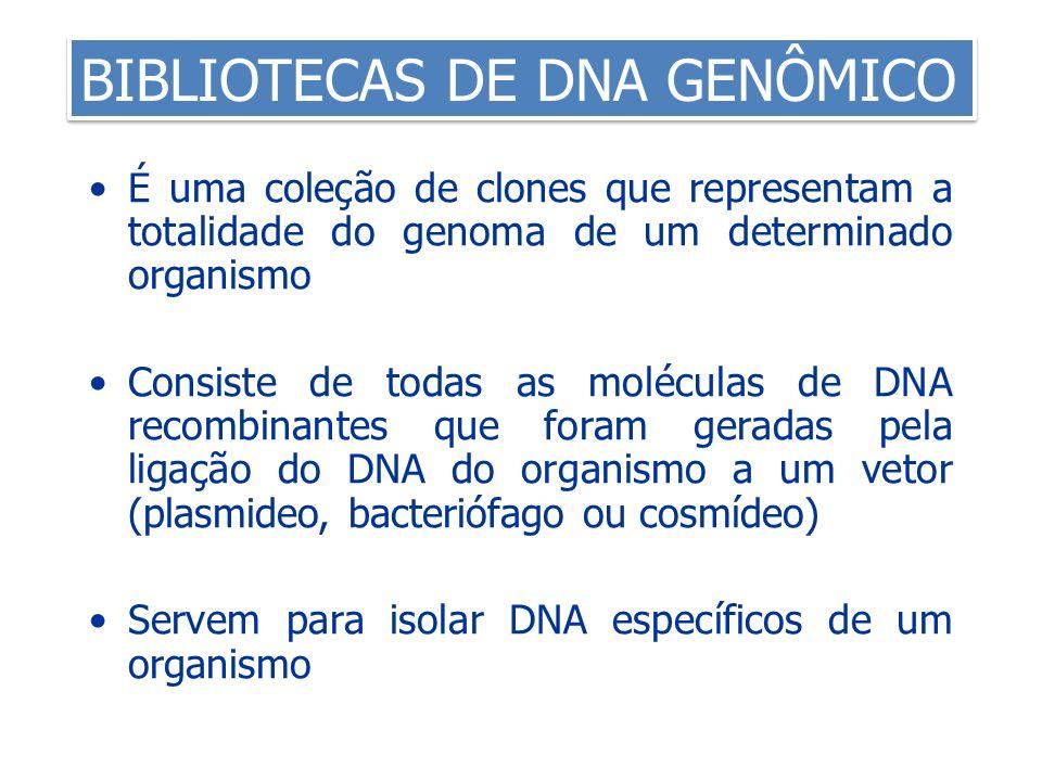 BIBLIOTECAS DE DNA GENÔMICO É uma coleção de clones que representam a totalidade do genoma de um determinado organismo Consiste de todas as moléculas