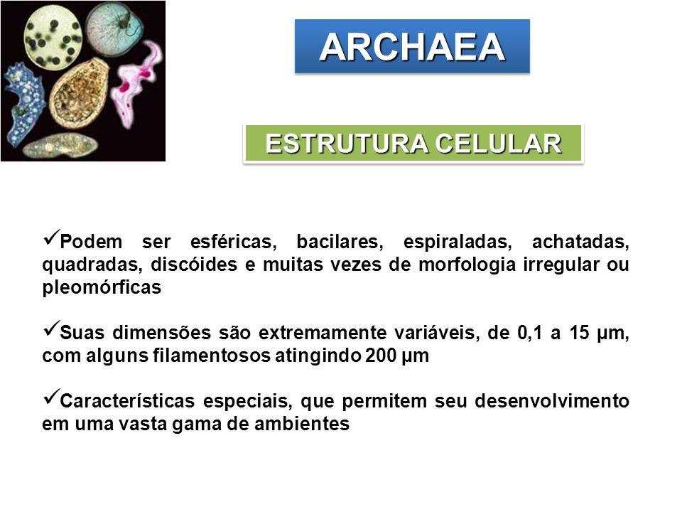 ARCHAEAARCHAEA ESTRUTURA CELULAR Podem ser esféricas, bacilares, espiraladas, achatadas, quadradas, discóides e muitas vezes de morfologia irregular o
