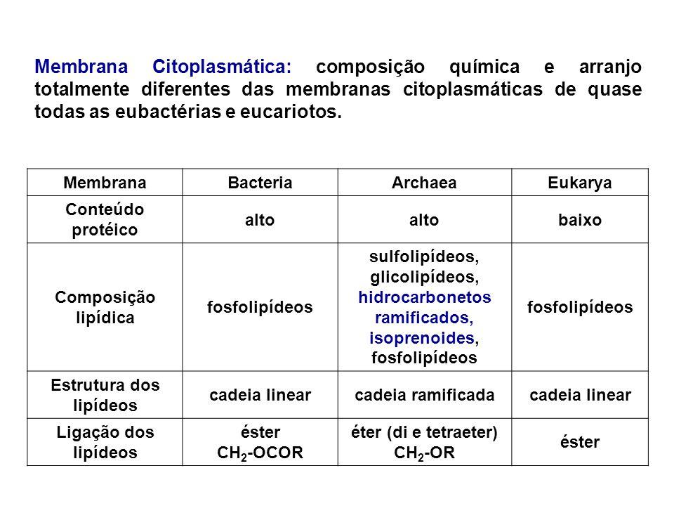 Membrana Citoplasmática: composição química e arranjo totalmente diferentes das membranas citoplasmáticas de quase todas as eubactérias e eucariotos.