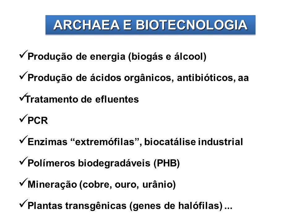 ARCHAEA E BIOTECNOLOGIA Produção de energia (biogás e álcool) Produção de ácidos orgânicos, antibióticos, aa Tratamento de efluentes PCR Enzimas extre