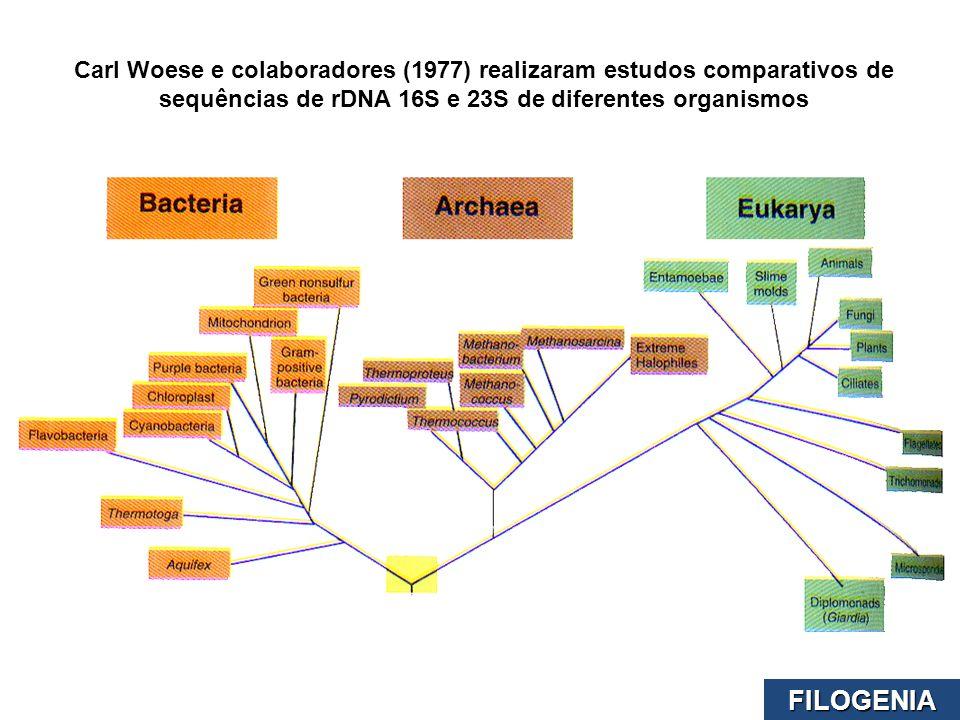 Carl Woese e colaboradores (1977) realizaram estudos comparativos de sequências de rDNA 16S e 23S de diferentes organismos FILOGENIA