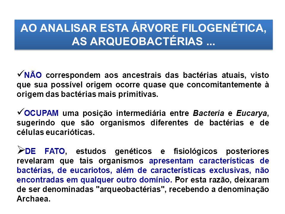 AO ANALISAR ESTA ÁRVORE FILOGENÉTICA, AS ARQUEOBACTÉRIAS... NÃO correspondem aos ancestrais das bactérias atuais, visto que sua possível origem ocorre