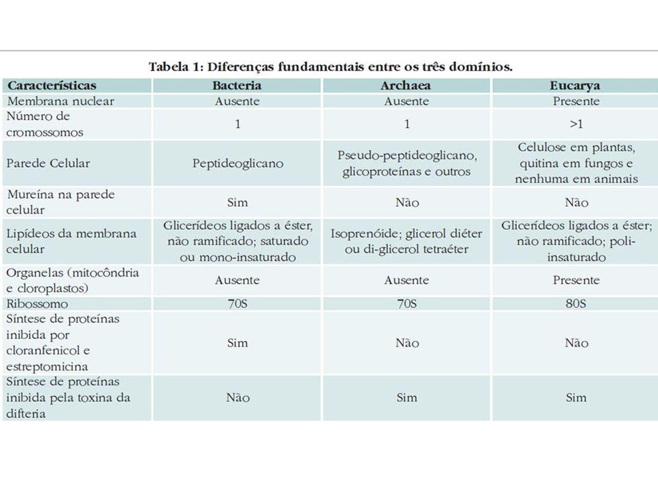 Enfim, as arqueas assemelham-se ao domínio Bacteria na sua organização estrutural e metabolismo, enquanto que o seu sistema de informação genética é mais parecido com o domínio Eukarya.