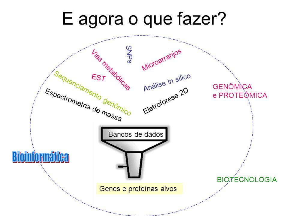 E agora o que fazer? EST Vias metabólicas Análise in silico SNPs GENÔMICA e PROTEÔMICA BIOTECNOLOGIA Microarranjos Sequenciamento genômico Eletrofores