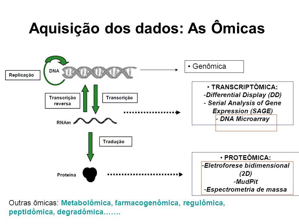 Era Pós-Genômica GENOMA – DNA – 3,4 bilhões de nt TRANSCRIPTOMA – mRNA – 30 mil genes PROTEOMA – Proteínas – 0,3-1,2 milhão proteínas Homo sapiens Modificações pós- traducionais.