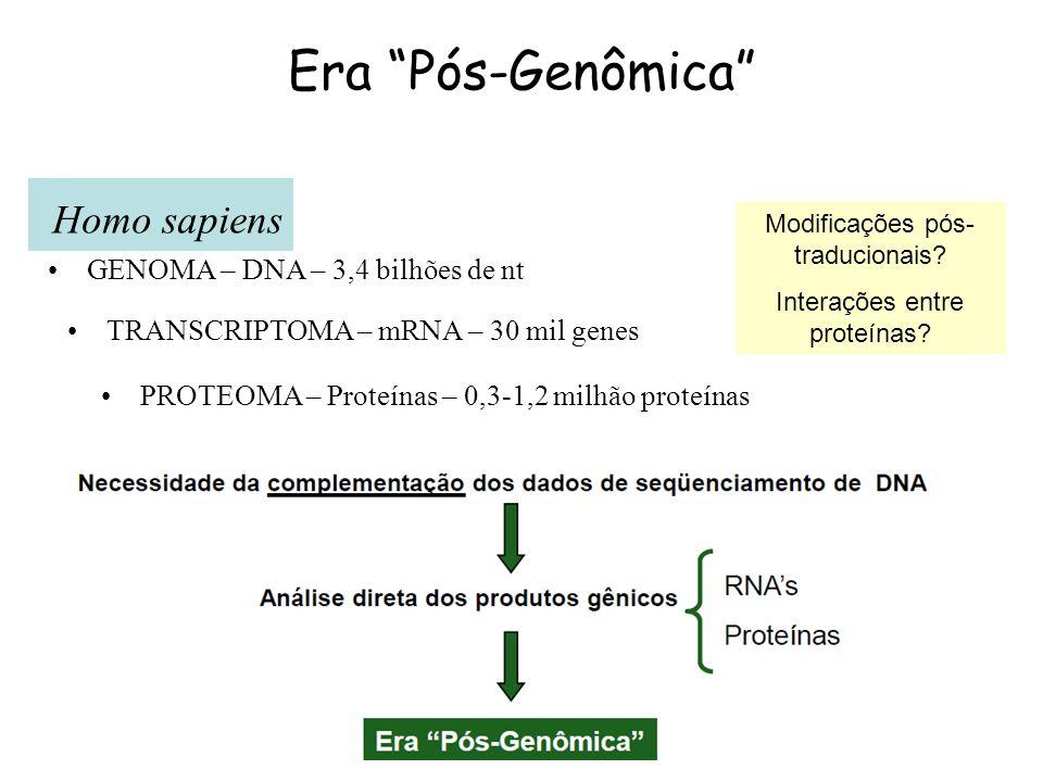 Era Pós-Genômica GENOMA – DNA – 3,4 bilhões de nt TRANSCRIPTOMA – mRNA – 30 mil genes PROTEOMA – Proteínas – 0,3-1,2 milhão proteínas Homo sapiens Mod