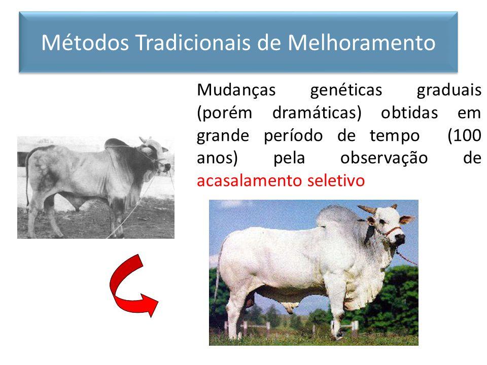 Mudanças genéticas graduais (porém dramáticas) obtidas em grande período de tempo (100 anos) pela observação de acasalamento seletivo Métodos Tradicio
