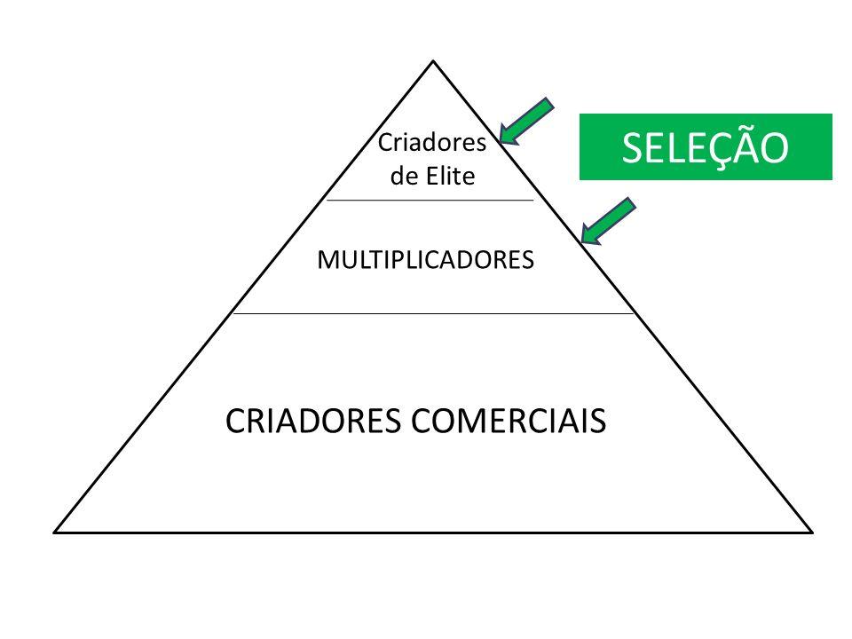 Criadores de Elite MULTIPLICADORES CRIADORES COMERCIAIS SELEÇÃO