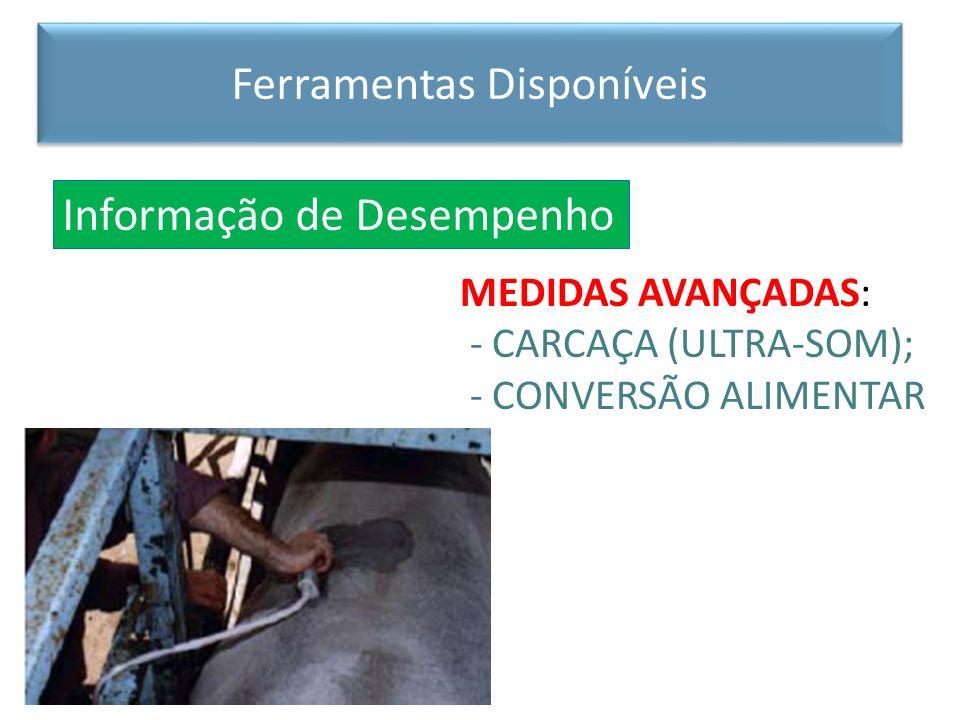 MEDIDAS AVANÇADAS: - CARCAÇA (ULTRA-SOM); - CONVERSÃO ALIMENTAR Informação de Desempenho Ferramentas Disponíveis