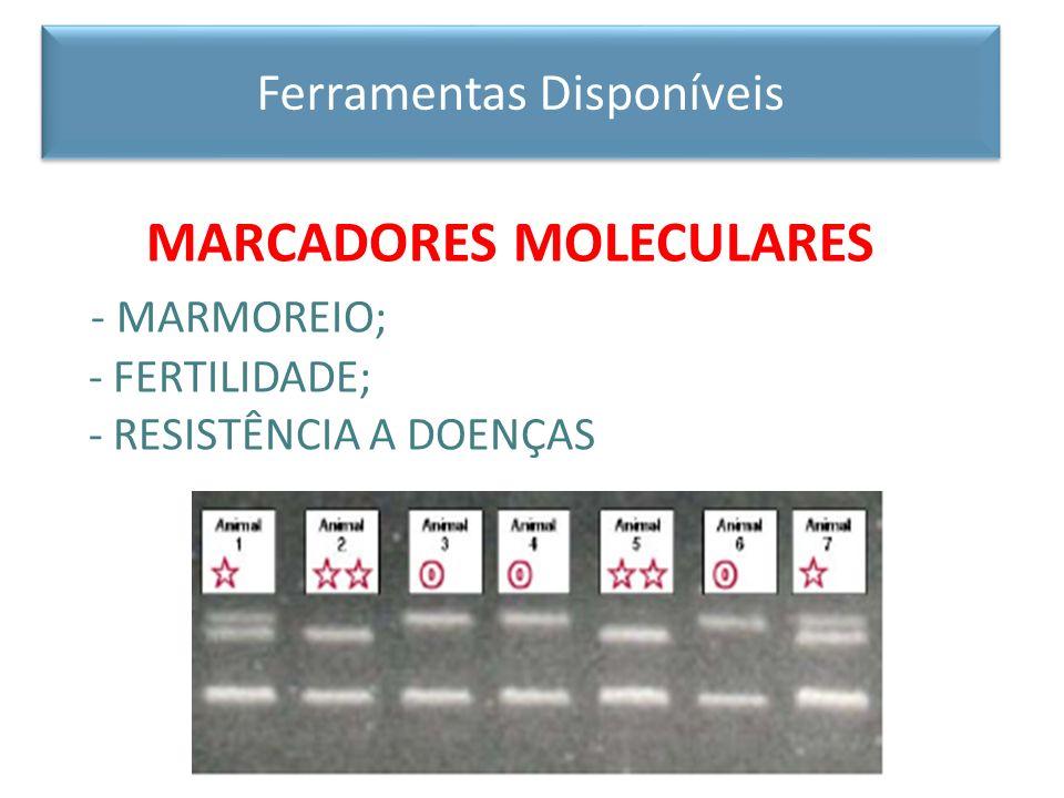 MARCADORES MOLECULARES - MARMOREIO; - FERTILIDADE; - RESISTÊNCIA A DOENÇAS Ferramentas Disponíveis